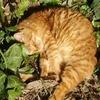 800px-cat-by-laziale93-105222.jpg