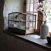 bird-cage-402205-640-141889.jpg