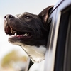 dog-1149964-640-169027.jpg
