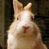 rabbit-1455140-640-154319.jpg
